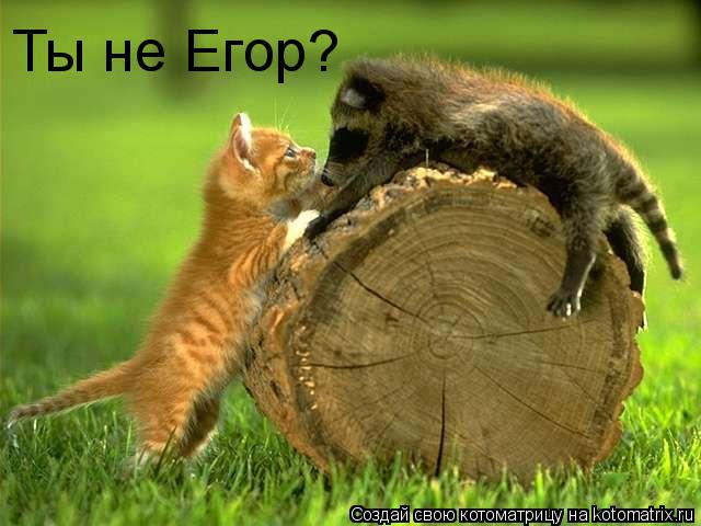 Котоматрица: Ты не Егор?