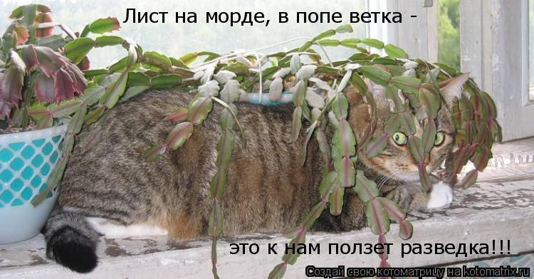 Котоматрица: Лист на морде, в попе ветка - это к нам ползет разведка!!!