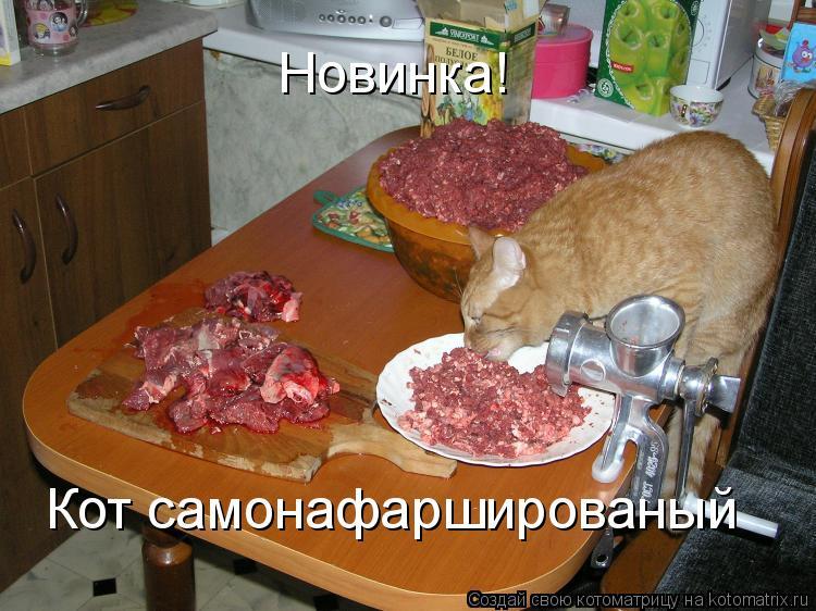Котоматрица: Новинка! Кот самонафаршированый