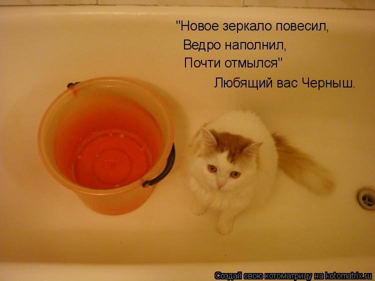"""Котоматрица: Ведро наполнил, Любящий вас Черныш. """"Новое зеркало повесил, Почти отмылся"""""""