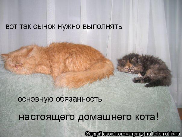 Котоматрица: вот так сынок нужно выполнять основную обязанность  настоящего домашнего кота!
