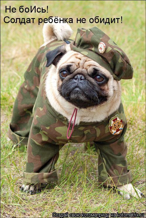 Котоматрица: Не боИсь!  Солдат ребёнка не обидит!