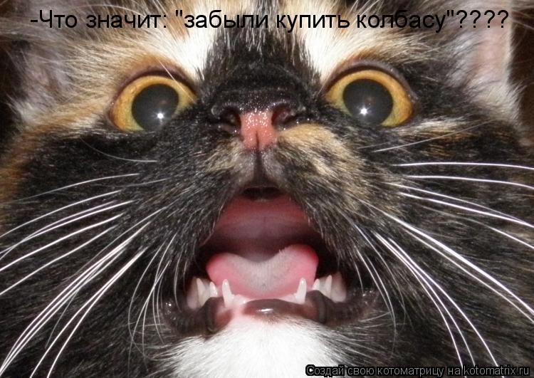 """Котоматрица: -Что значит: """"забыли купить колбасу""""????"""