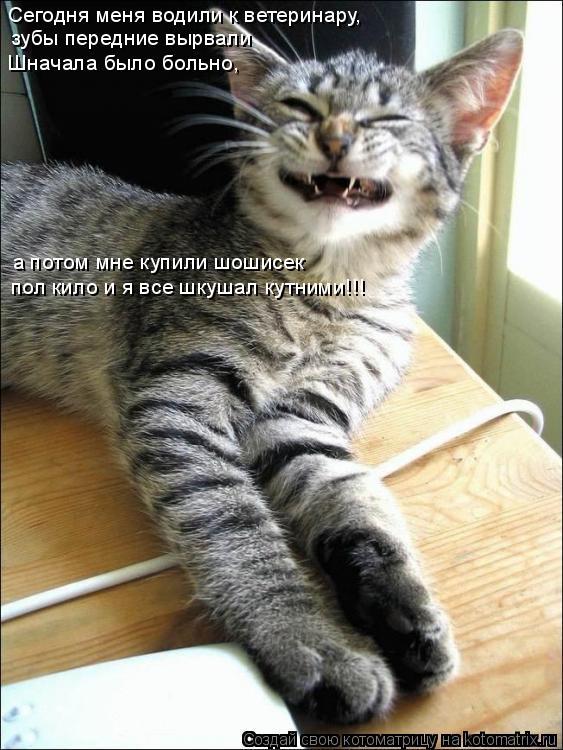 Котоматрица: Сегодня меня водили к ветеринару,  зубы передние вырвали Шначала было больно, а потом мне купили шошисек  пол кило и я все шкушал кутними!!!