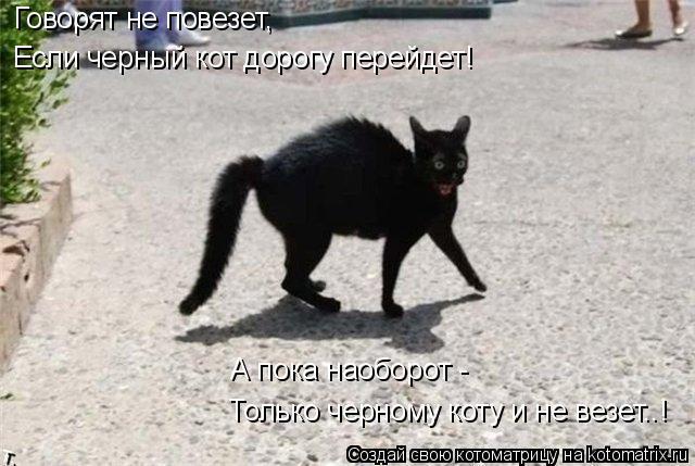 Котоматрица: Говорят не повезет, Если черный кот дорогу перейдет! Только черному коту и не везет..! А пока наоборот -