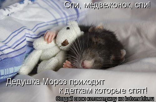 Котоматрица: Спи, медвежонок, спи! Дедушка Мороз приходит  к деткам которые спят!