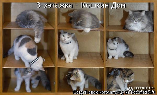 Котоматрица: 3-хэтажка - Кошкин Дом