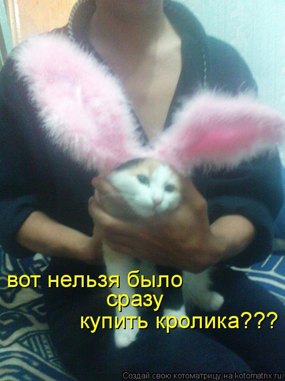 Котоматрица: вот нельзя было  сразу купить кролика???