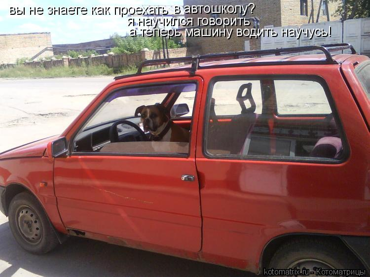 Котоматрица: вы не знаете как проехать в автошколу? я научился говорить а теперь машину водить научусь!