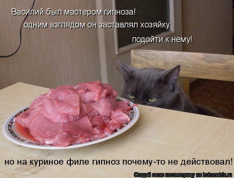 Котоматрица: Василий был мастером гипноза! одним взглядом он заставлял хозяйку подойти к нему! но на куриное филе гипноз почему-то не действовал!