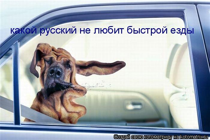 Котоматрица: какой русский не любит быстрой езды