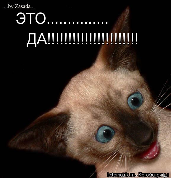 Котоматрица: ЭТО............... ДА!!!!!!!!!!!!!!!!!!!!!!