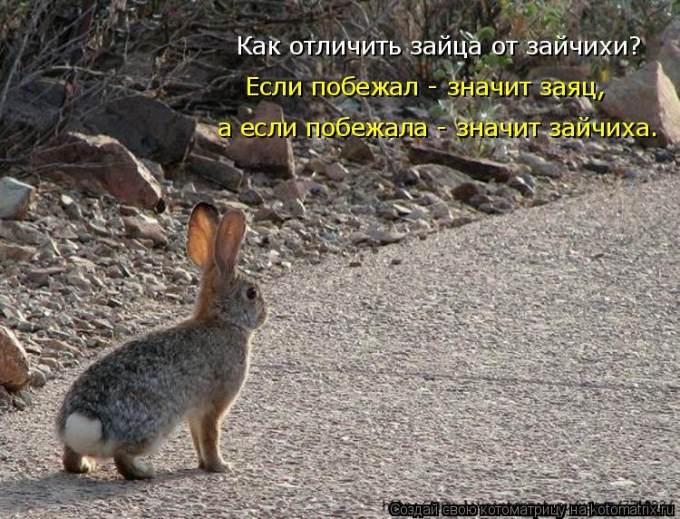 Котоматрица: Как отличить зайца от зайчихи? Если побежал - значит заяц, а если побежала - значит зайчиха.