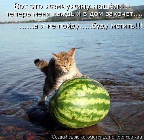 Котоматрица: Вот это жемчужину нашёл!!!! теперь меня каждый в дом захочет.... ......а я не пойду.....буду мстить!!!