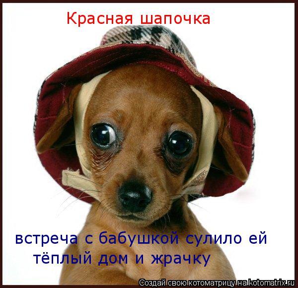 Котоматрица: Красная шапочка  встреча с бабушкой сулило ей тёплый дом и жрачку