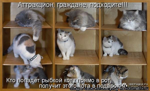 Котоматрица: Аттракцион, граждане, подходите!!! Кто попадет рыбкой коту прямо в рот,  получит этого кота в подарок!!!