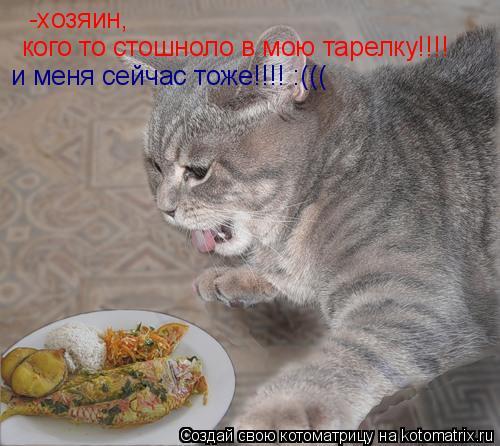 Котоматрица: -хозяин, кого то стошноло в мою тарелку!!!! и меня сейчас тоже!!!! :(((