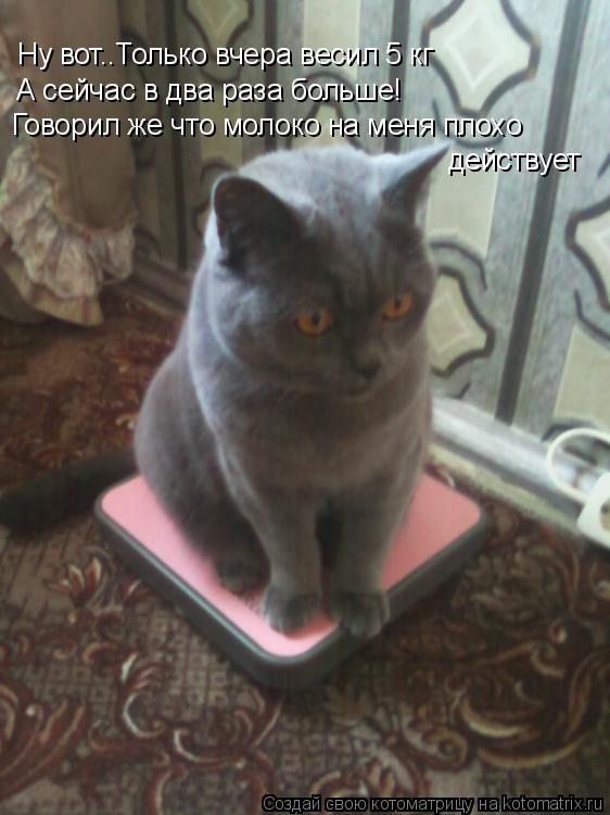 Котоматрица: Ну вот..Только вчера весил 5 кг  А сейчас в два раза больше! Говорил же что молоко на меня плохо действует
