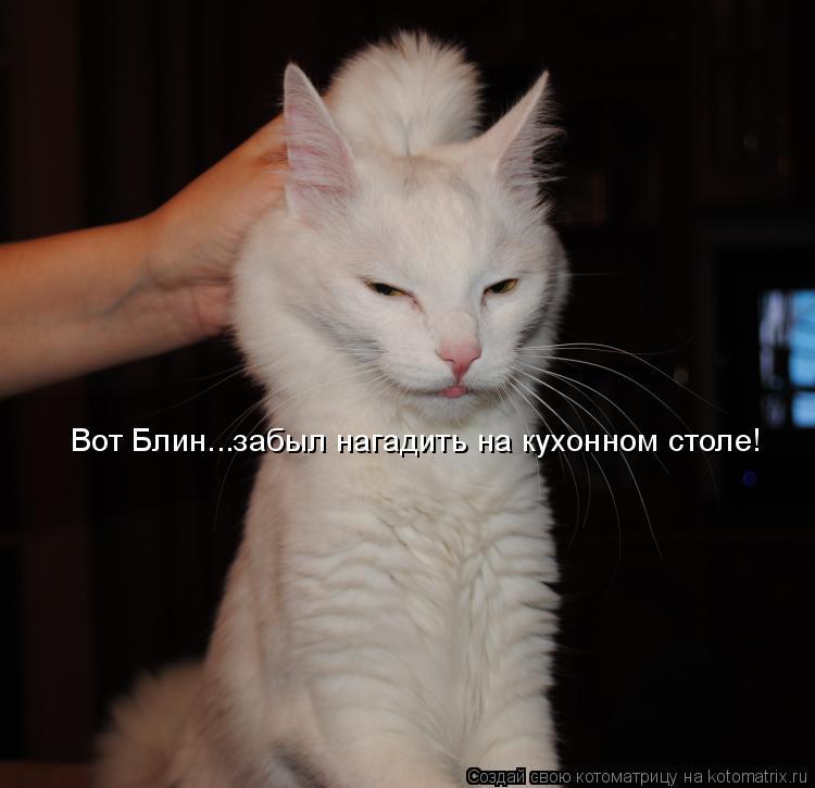 Котоматрица: Вот Блин...забыл нагадить на кухонном столе!