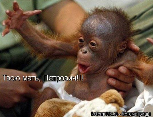 Котоматрица: Твою мать, Петрович!!!
