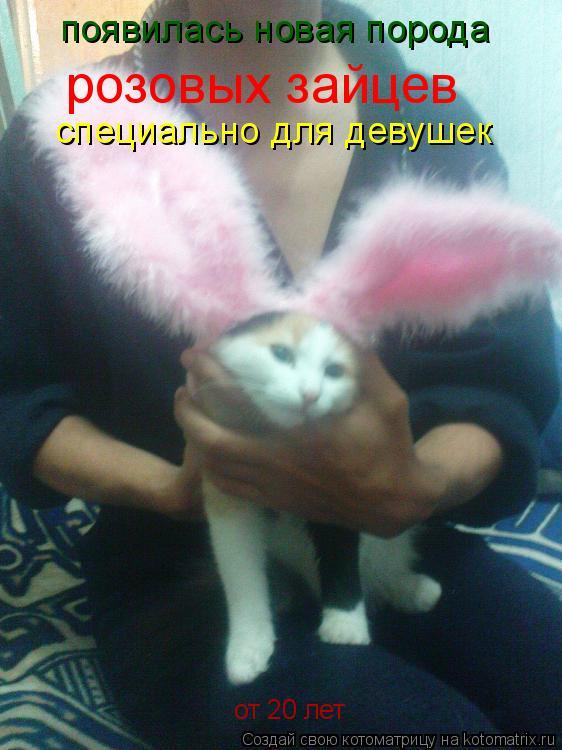 Котоматрица: появилась новая порода розовых зайцев специально для девушек от 20 лет