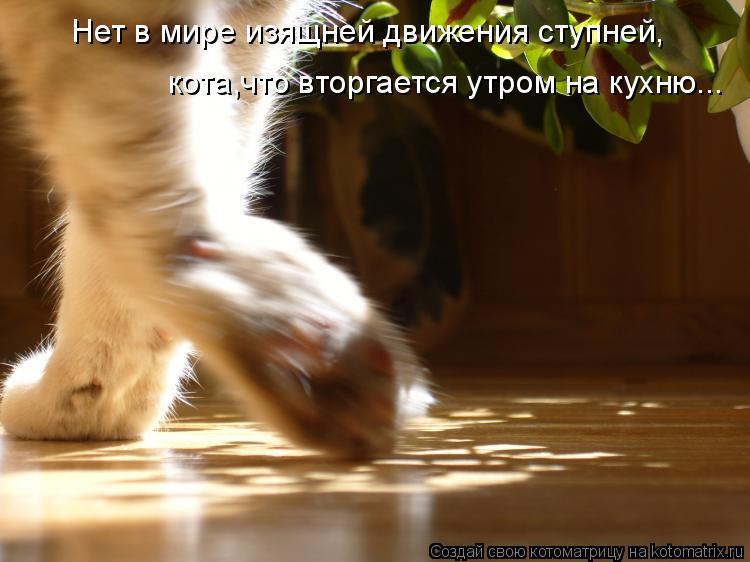 Котоматрица: Нет в мире изящней движения ступней, кота,что вторгается утром на кухню...