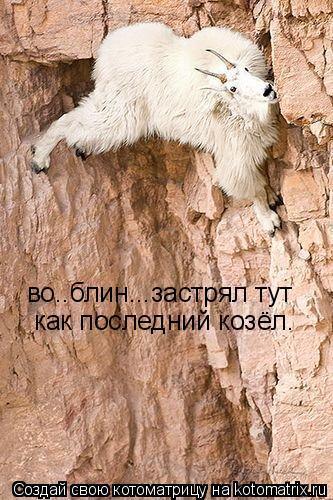 Котоматрица: во..блин...застрял тут  как последний козёл.