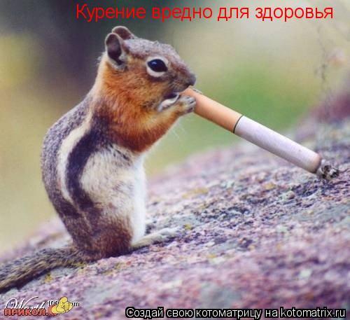 Котоматрица: Курение вредно для здоровья