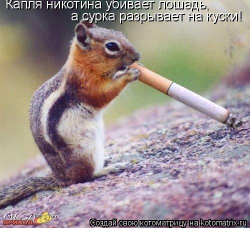 Котоматрица: Капля никотина убивает лошадь, а сурка разрывает на куски!