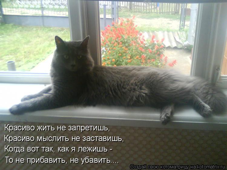 Котоматрица: Красиво жить не запретишь, Красиво мыслить не заставишь, Когда вот так, как я лежишь -  То не прибавить, не убавить....