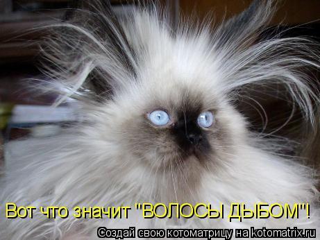 """Котоматрица: Вот что значит """"ВОЛОСЫ ДЫБОМ""""!"""