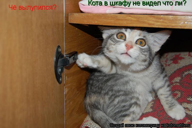 Котоматрица: Чё вылупился? Кота в шкафу не видел что ли?