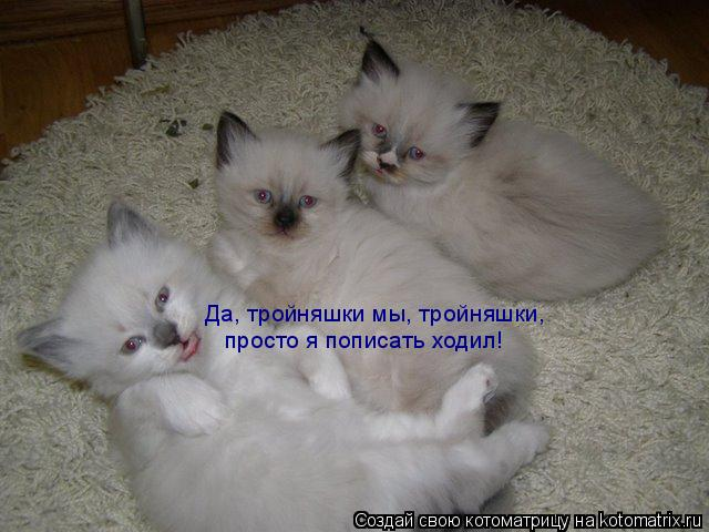 Котоматрица: Да, тройняшки мы, тройняшки, просто я пописать ходил!