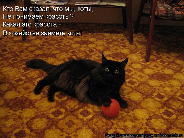 Котоматрица: Кто Вам сказал, что мы, коты, Не понимаем красоты? Какая это красота -  В хозяйстве заиметь кота!