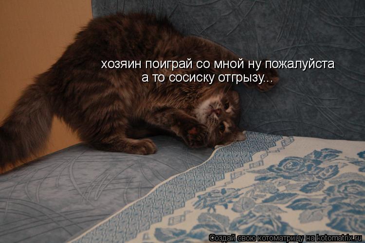 Котоматрица: хозяин поиграй со мной ну пожалуйста а то сосиску отгрызу...