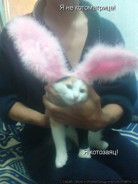 Котоматрица: Я не котоматрица! Я котозаяц!