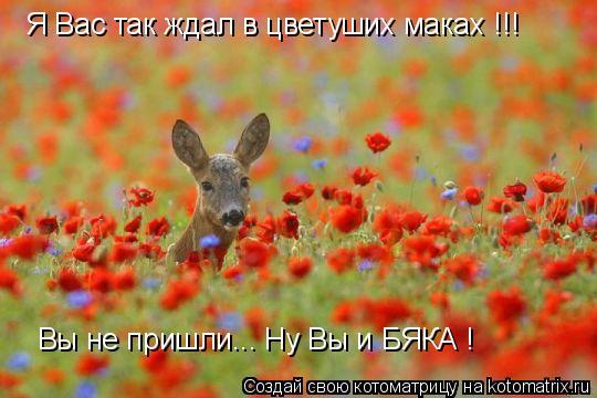 Котоматрица: Я Вас так ждал в цветуших маках !!! Вы не пришли... Ну Вы и БЯКА !