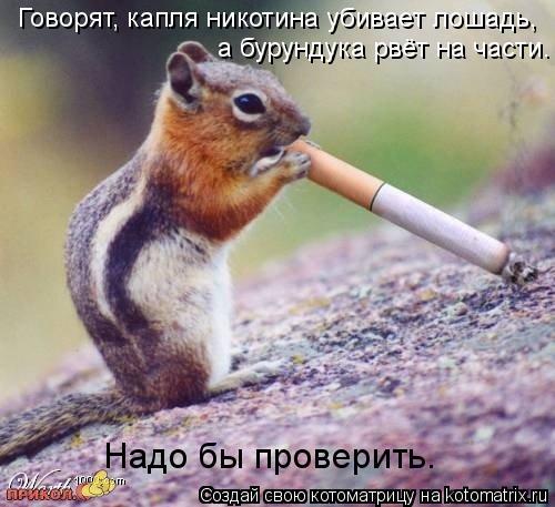 Котоматрица: Говорят, капля никотина убивает лошадь, а бурундука рвёт на части. Надо бы проверить.