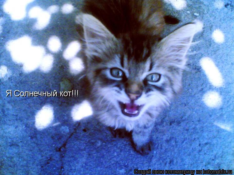 Котоматрица: Я Солнечный кот!!!