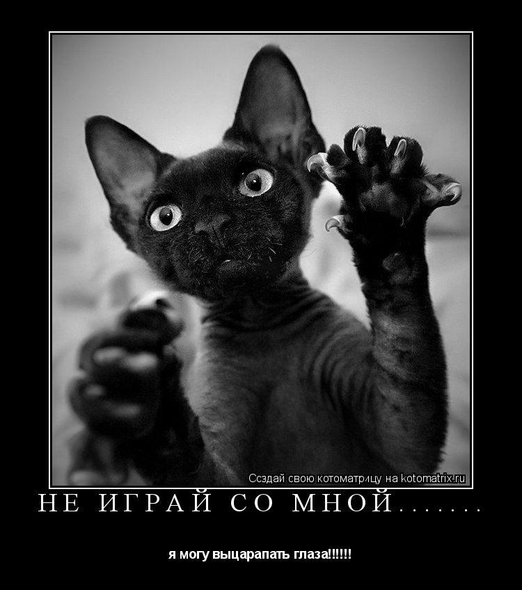 Котоматрица: не играй со мной....... я могу выцарапать глаза!!!!!!