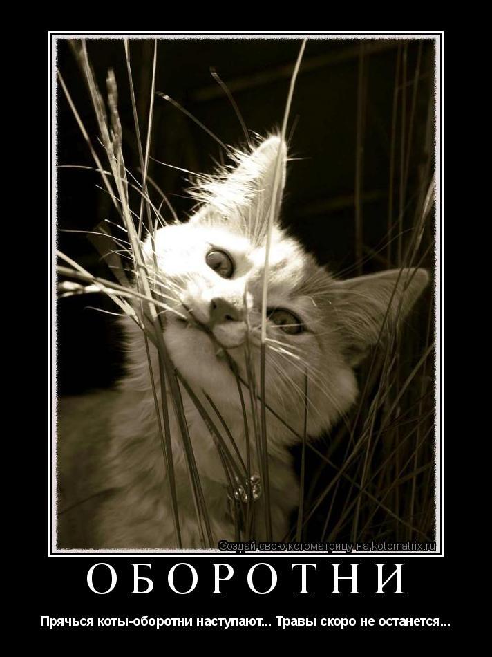 Котоматрица: Оборотни Прячься коты-оборотни наступают... Травы скоро не останется...