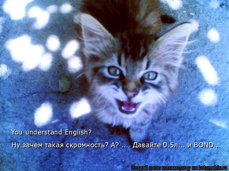 Котоматрица: Ну зачем такая скромность? А? .... Давайте 0.5л... и BOND... You understand English?