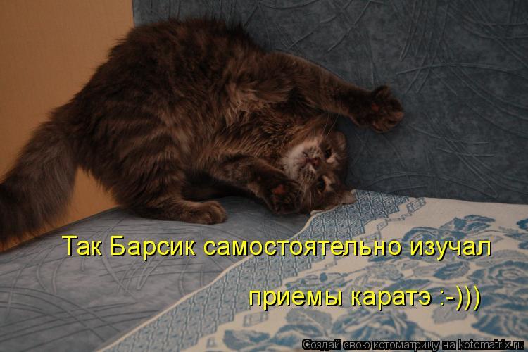 Котоматрица: Так Барсик самостоятельно изучал  приемы каратэ :-)))