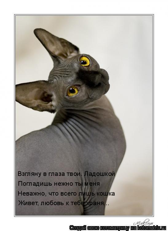Котоматрица: Взгляну в глаза твои. Ладошкой Погладишь нежно ты меня Неважно, что всего лишь кошка Живет, любовь к тебе храня...