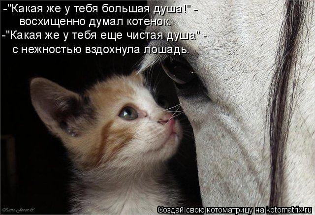 """Котоматрица: -""""Какая же у тебя большая душа!"""" -  восхищенно думал котенок. -""""Какая же у тебя еще чистая душа"""" - с нежностью вздохнула лошадь."""