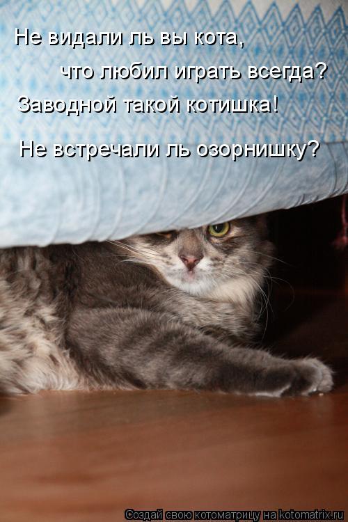 Котоматрица: Не видали ль вы кота, что любил играть всегда? Заводной такой котишка! Не встречали ль озорнишку?