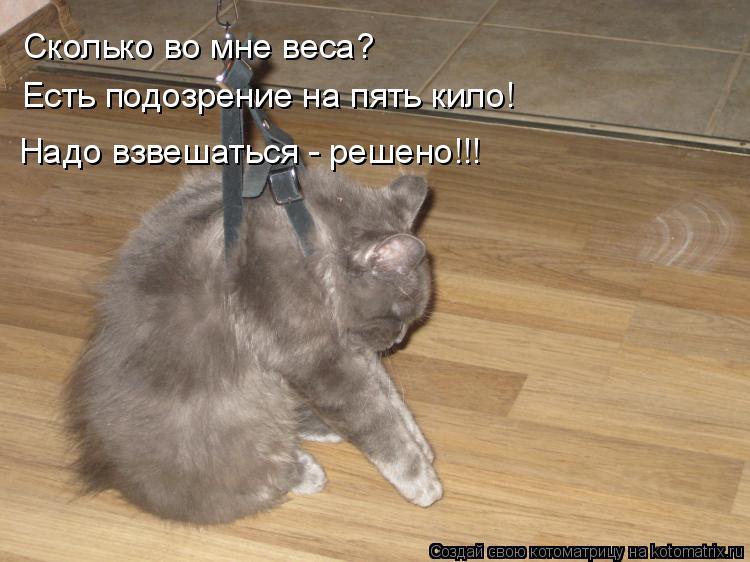 Котоматрица: Сколько во мне веса? Есть подозрение на пять кило! Надо взвешаться - решено!!!