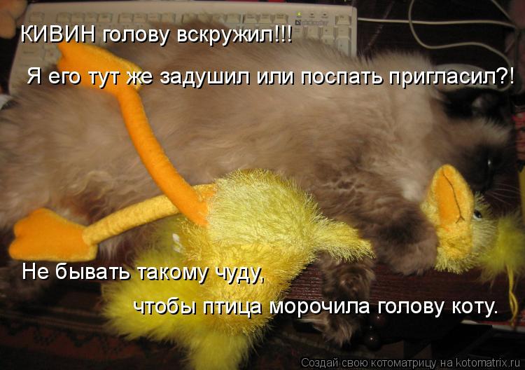 Котоматрица: КИВИН голову вскружил!!!  Я его тут же задушил или поспать пригласил?! Не бывать такому чуду,  чтобы птица морочила голову коту.