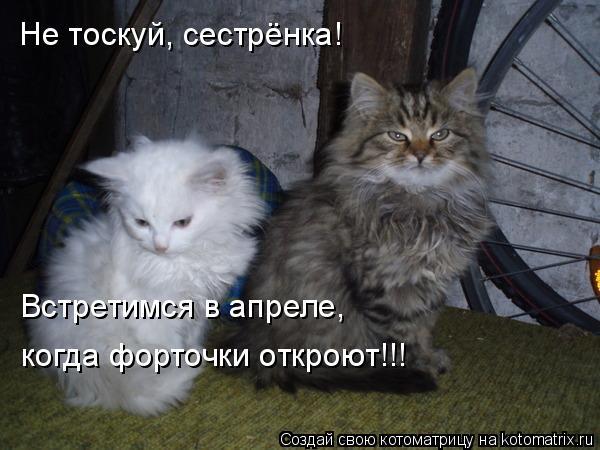 Котоматрица: Не тоскуй, сестрёнка!  Встретимся в апреле, когда форточки откроют!!!