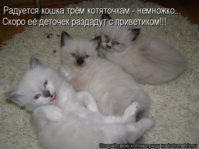 Котоматрица: Радуется кошка трём котяточкам - немножко... Скоро её деточек раздадут с приветиком!!!